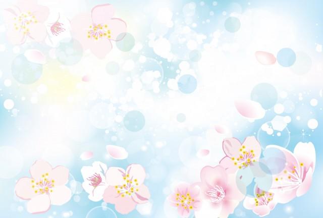 桜の背景 ブルー