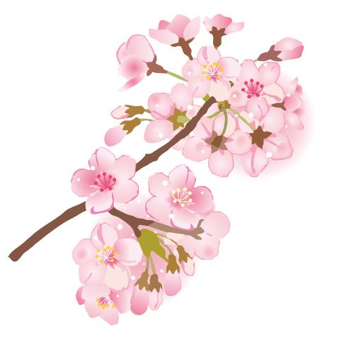 桜の枝イラスト【…