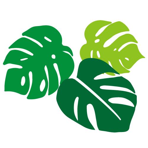 モンステラの葉っぱイラスト 無料イラスト素材素材ラボ