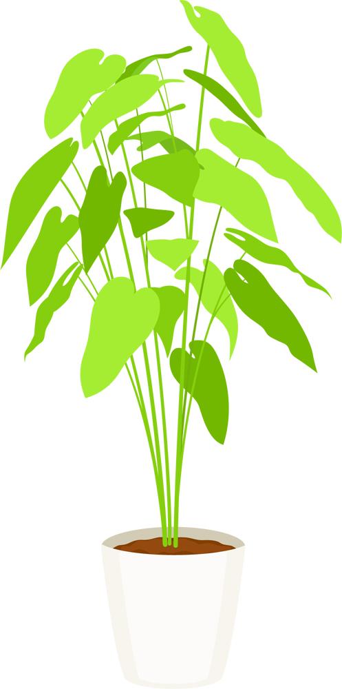観葉植物csaipngjpg 無料イラスト素材素材ラボ