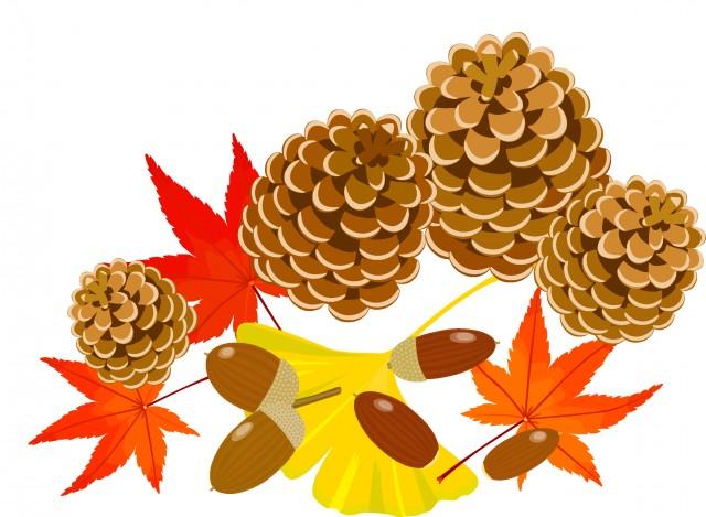 秋の木の実と落ち葉2 無料イラスト素材素材ラボ