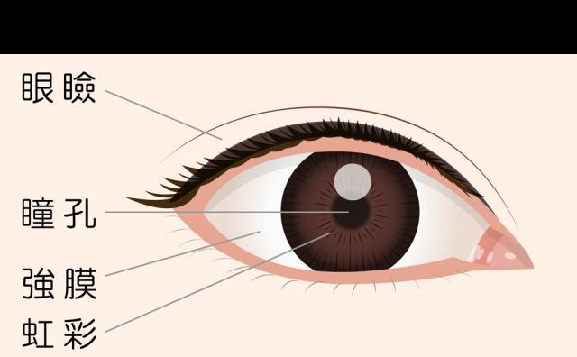 目の構造図イラストcsaipng 無料イラスト素材素材ラボ