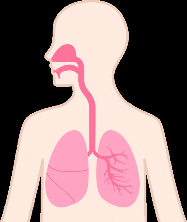 「口 鼻」の画像検索結果