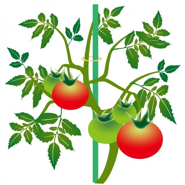 トマト 無料イラスト素材素材ラボ
