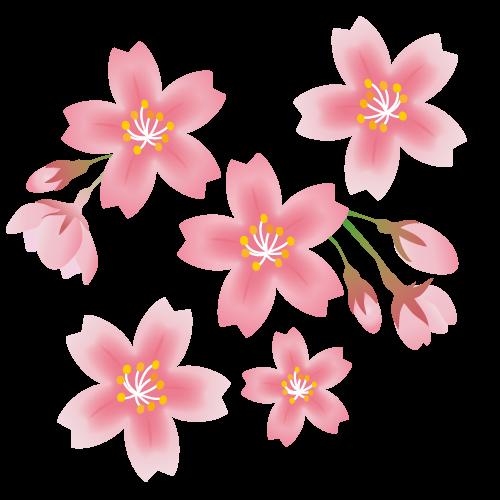 桜とつぼみのイラスト透過pngjpgepspdf 無料イラスト素材