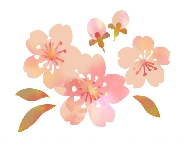 かわいい桜のフリ…