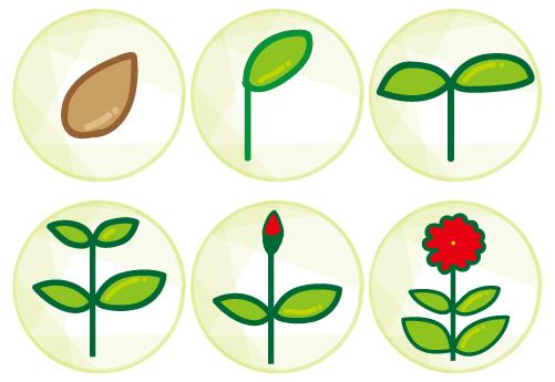 植物05 花の育て方 無料イラスト素材素材ラボ