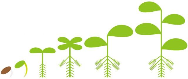 植物の成長013 無料イラスト素材素材ラボ