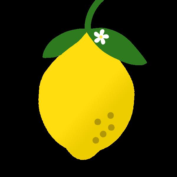 レモンの花のイラスト 無料イラスト素材素材ラボ
