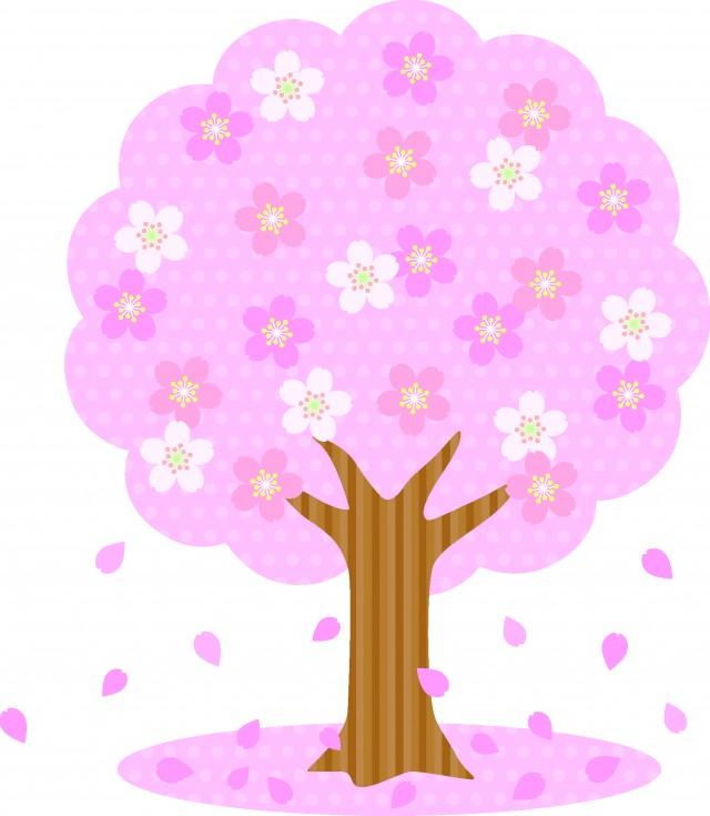 満開の桜の木のイ…