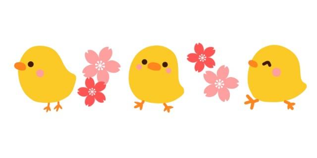 ひよこと桜の春ラ…