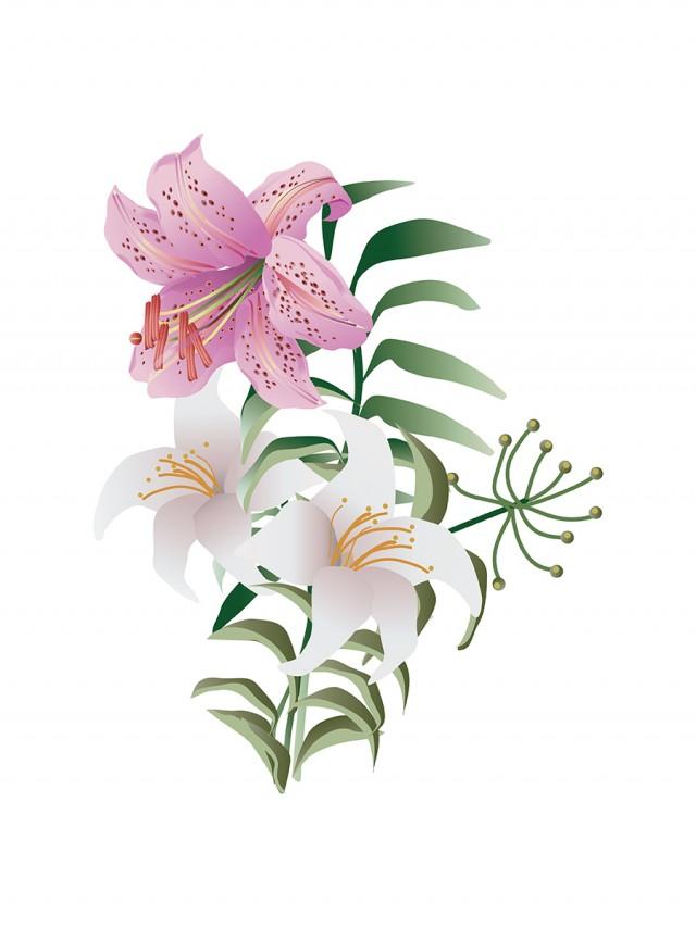 ユリの花のイラスト 無料イラスト素材素材ラボ