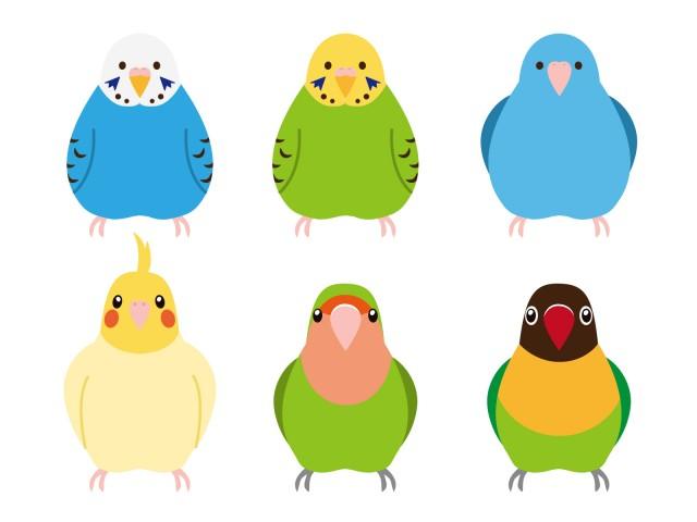 インコ小鳥の動物ペットのイラスト 無料イラスト素材素材ラボ
