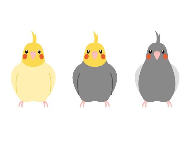 オカメインコ小鳥の動物ペットのイラスト 無料イラスト素材