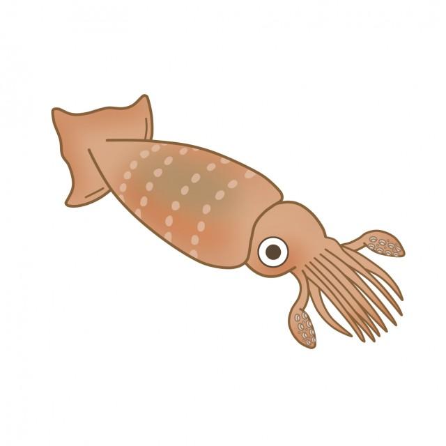 魚介のイラストイカ 無料イラスト素材素材ラボ