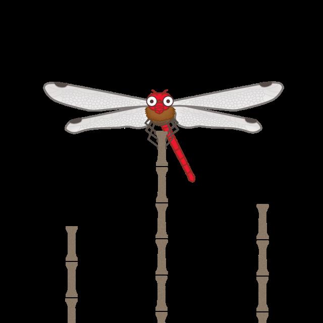 昆虫のイラスト トンボ 無料イラスト素材 素材ラボ