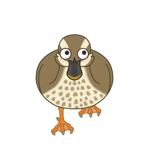 野鳥のイラスト カルガモ 無料イラスト素材 素材ラボ