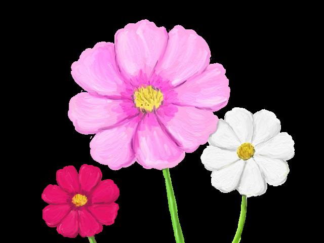 花コスモス 無料イラスト素材素材ラボ