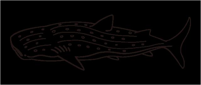ジンベエザメのイラスト 無料イラスト素材素材ラボ