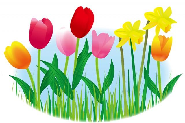 春の花チューリップスイセン 無料イラスト素材素材ラボ