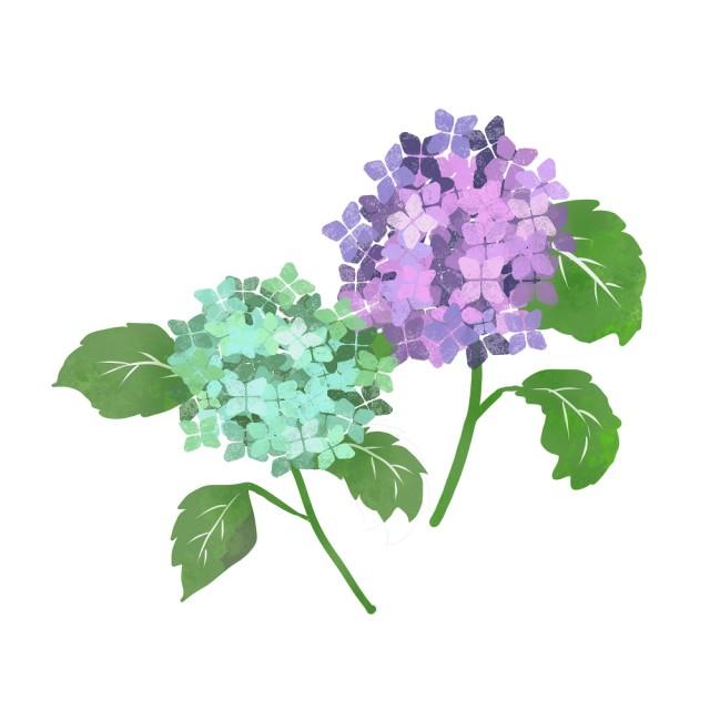 紫陽花イラスト 無料イラスト素材素材ラボ