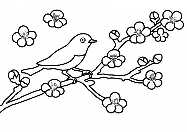 季節の塗り絵 2月 3月 梅とメジロ 無料イラスト素材 素材ラボ